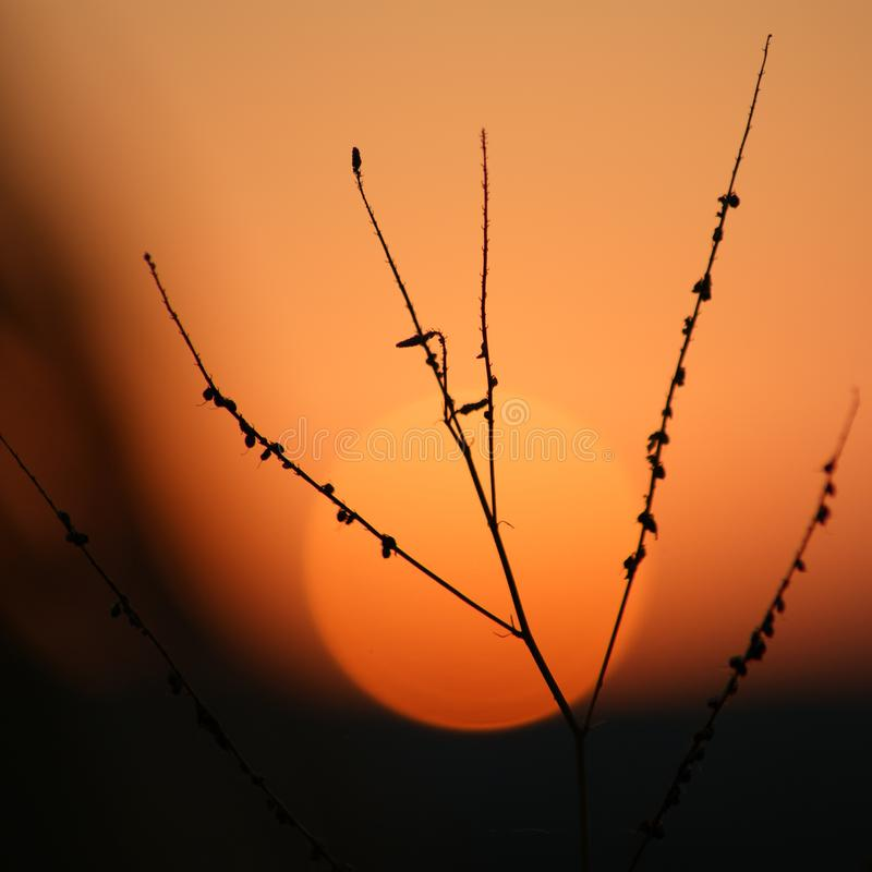 Tak op zonsondergang stock foto's