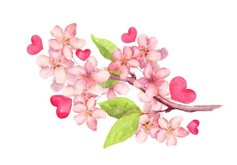 Tak van appelbloesem, de bloemen van de kersenboom Uitstekende waterverf botanische illustratie royalty-vrije illustratie