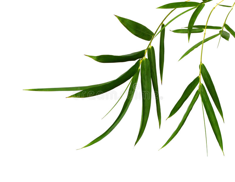 Tak van bamboe royalty-vrije stock afbeeldingen