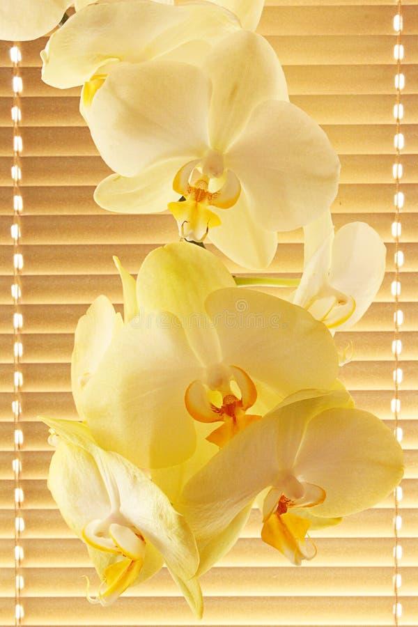 Tak van bloeiende tedere orchidee royalty-vrije stock afbeeldingen
