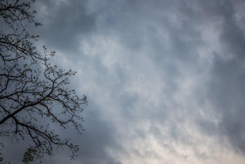 Tak van boom op recht tegen achtergrond van donkere stormachtige hemel royalty-vrije stock fotografie