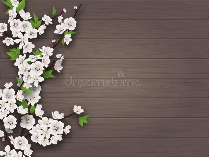 Tak van de de lente de bloeiende kers op oude houten achtergrond stock illustratie