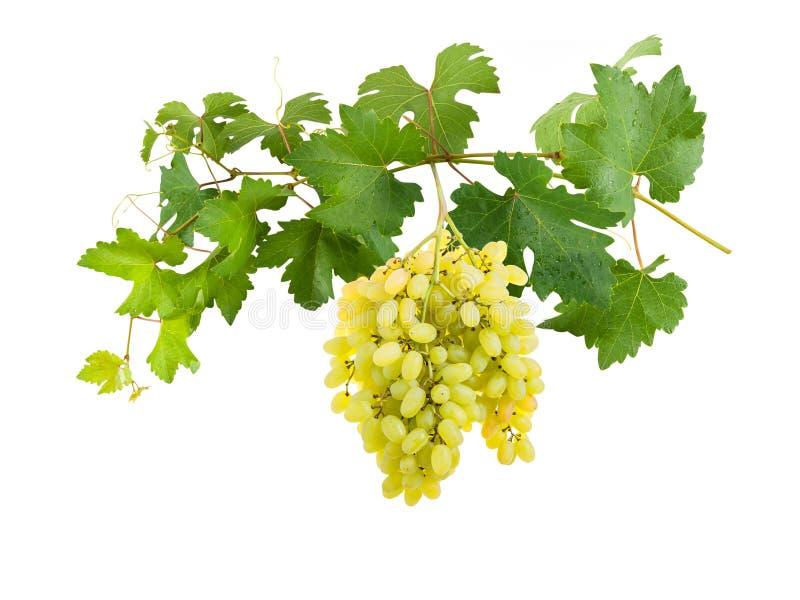 Tak van druiven met bessen royalty-vrije stock foto's