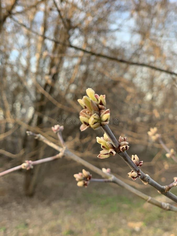 Tak van een boom in de lente royalty-vrije stock afbeeldingen