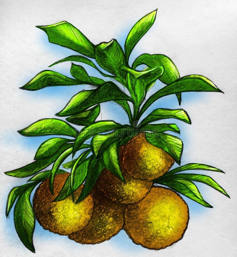 Tak van een oranje boom met vruchten stock illustratie