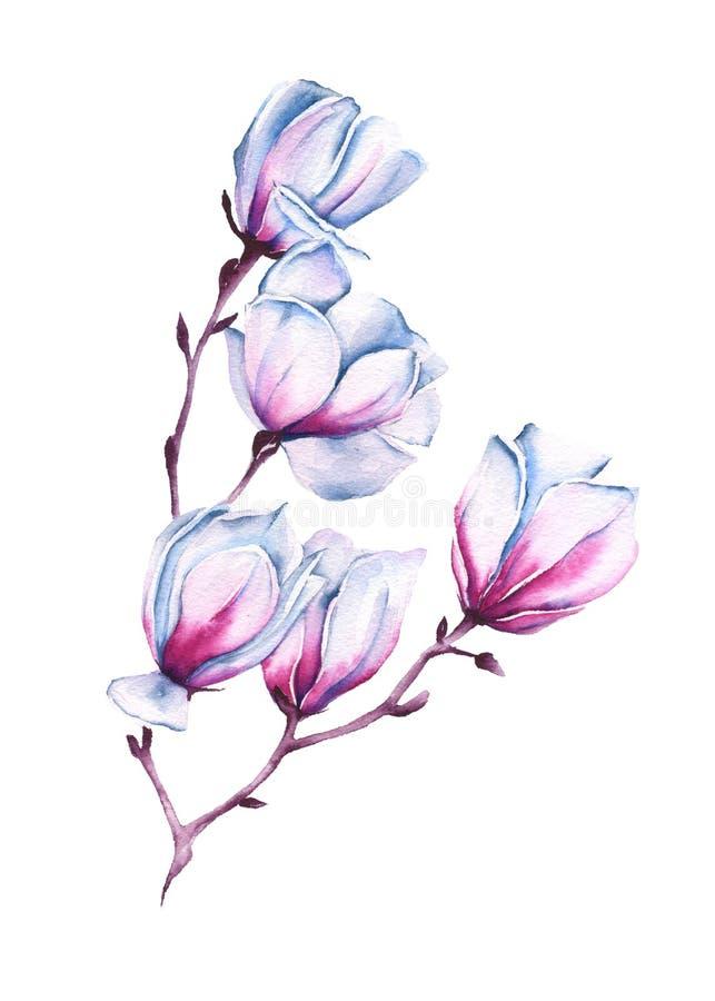 Tak van een roze Magnolia Geïsoleerde De illustratie van de waterverf stock illustratie