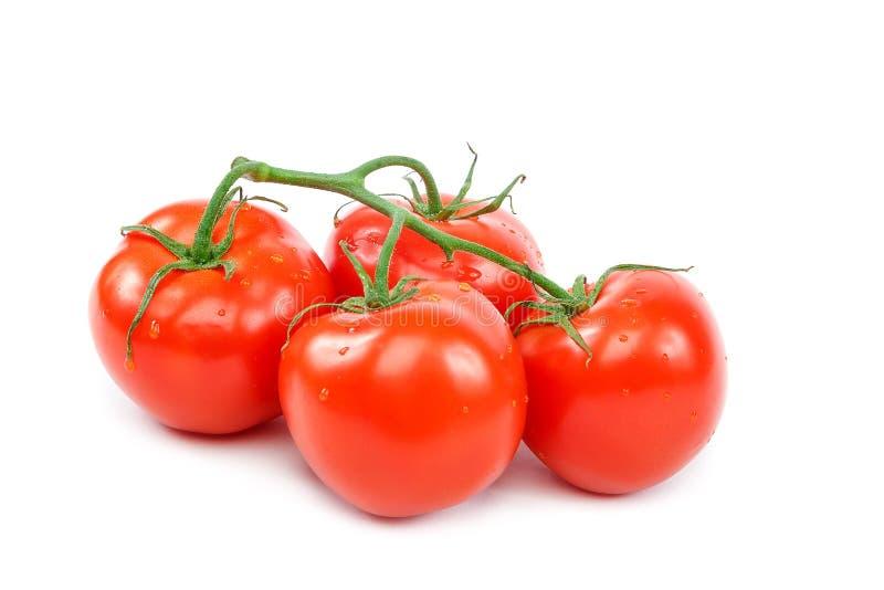 Tak van een verse rode tomaat op een witte achtergrond royalty-vrije stock foto's