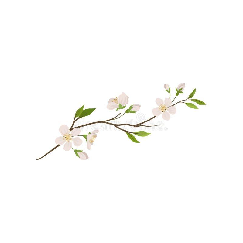 Tak van fruitboom met kleine bloemen Bloeiend takje van de lenteinstallatie Het Thema van de aard Gedetailleerd vlak vectorpictog vector illustratie