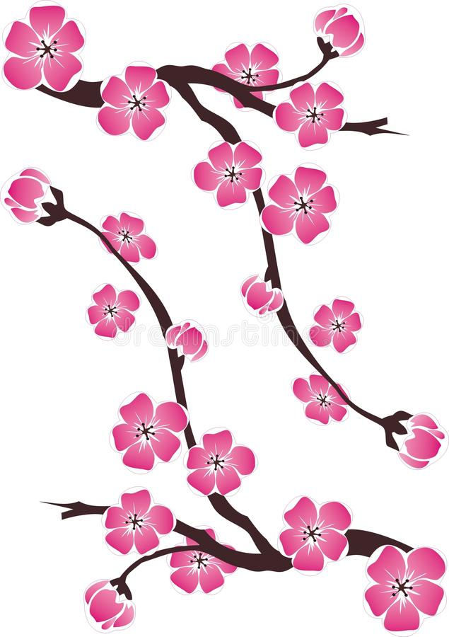 Tak van kersenbloesems op witte achtergrond stock afbeelding
