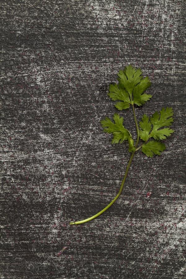 Tak van verse koriander op zwarte achtergrond versleten met krassen stock foto's