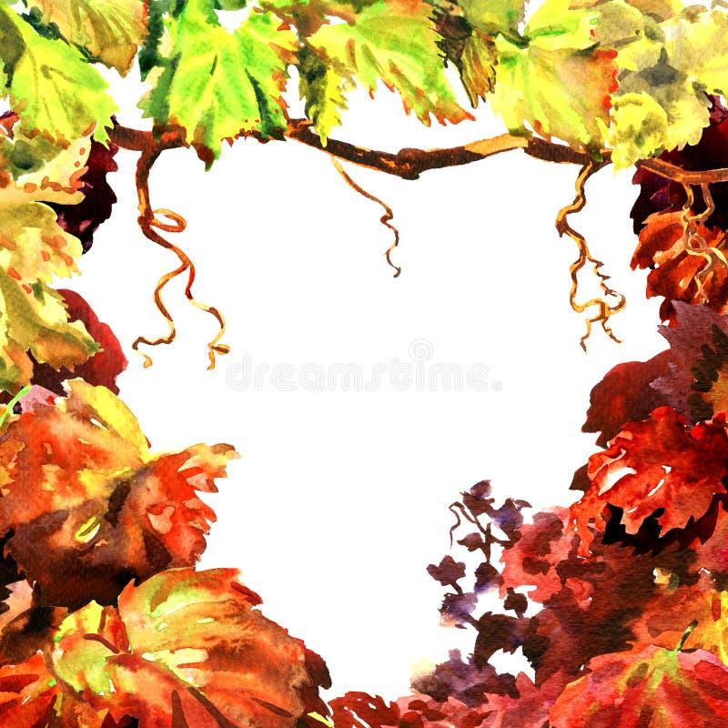 Tak van wijnstokbladeren, wijngaardkader, geïsoleerde wijnstokgrens, hand getrokken waterverfillustratie, witte achtergrond vector illustratie