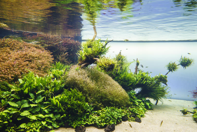 takasi för stil för natur för amanoakvarium sötvattens- arkivbilder