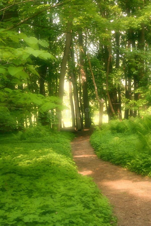 Free Take A Hike 02 Stock Photo - 137820