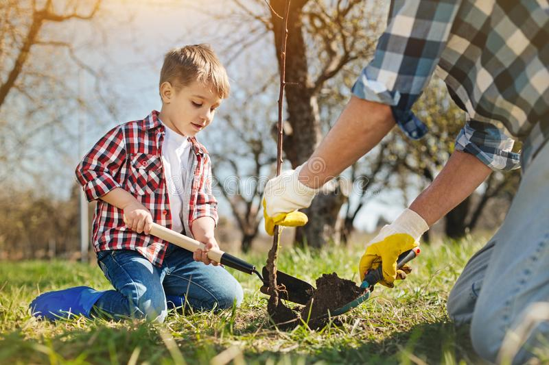 Nice little boy and his father planting a tree. Take care of nature. Pleasant little boy sitting in the garden and planting a tree with his father stock photography