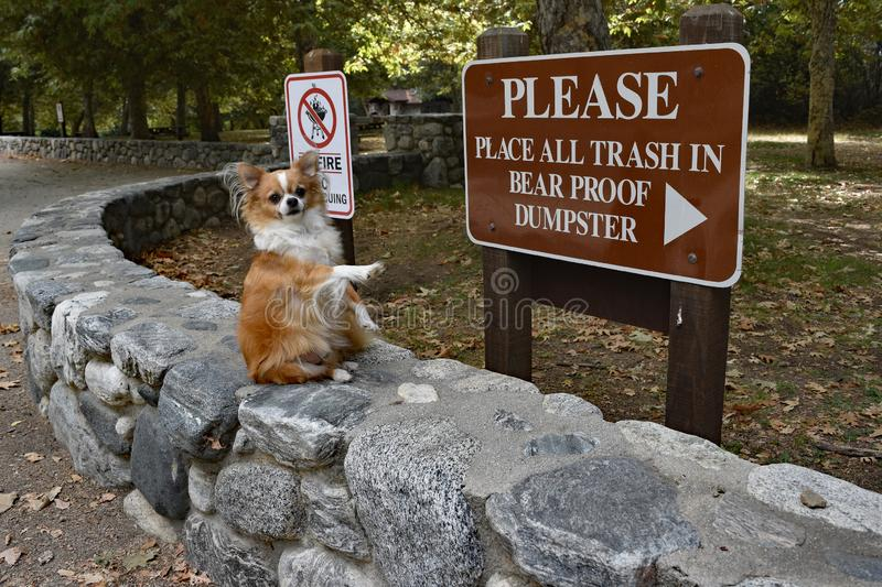Take care of your garbage. A cute dog sits on a stone wall in front of a sign pointing to the bin stock images