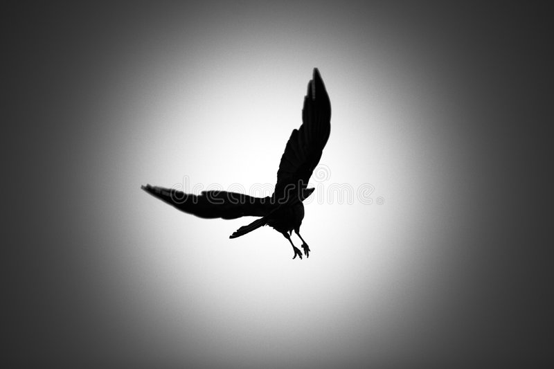Download Take Flight stock image. Image of crow, leave, beauty, dark - 863849