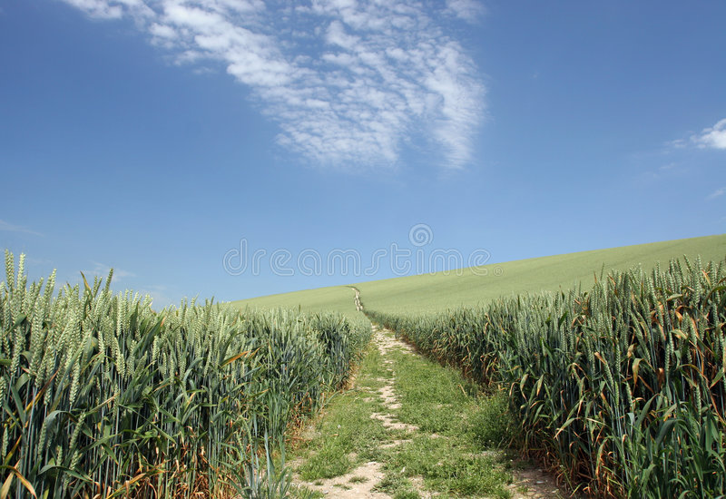 Download Take me home ... stock image. Image of crops, walk, road - 157337