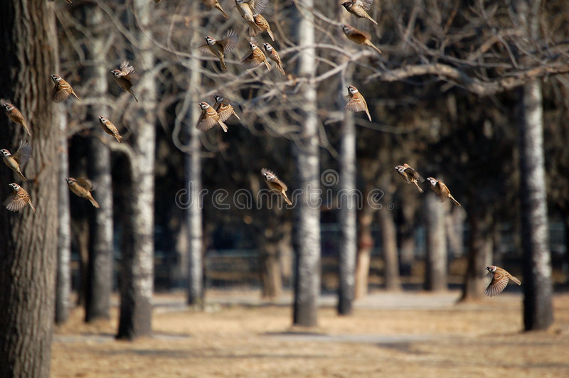 Download Take off stock image. Image of quickly, crowd, animals - 5387585