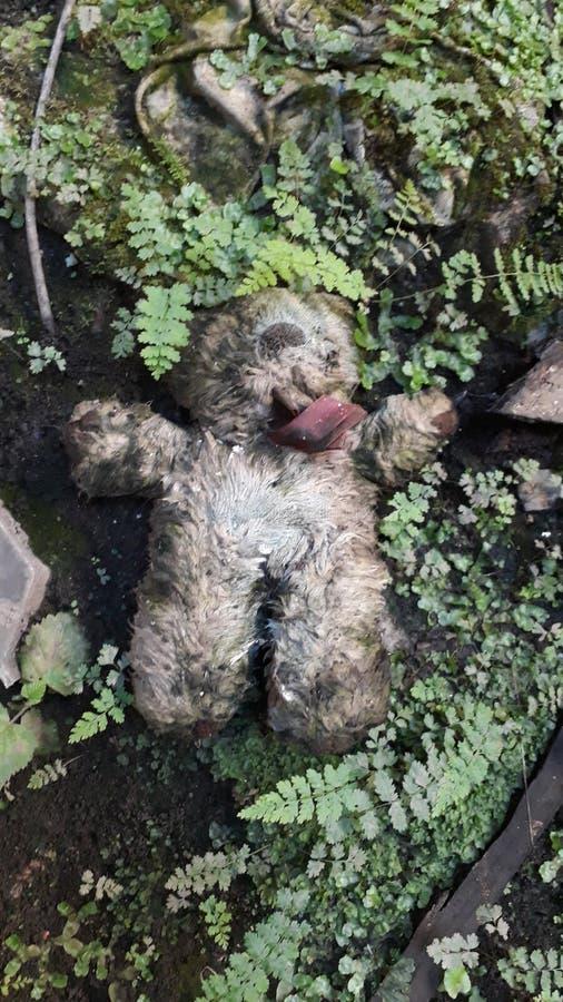 Creepy teddy stock photos