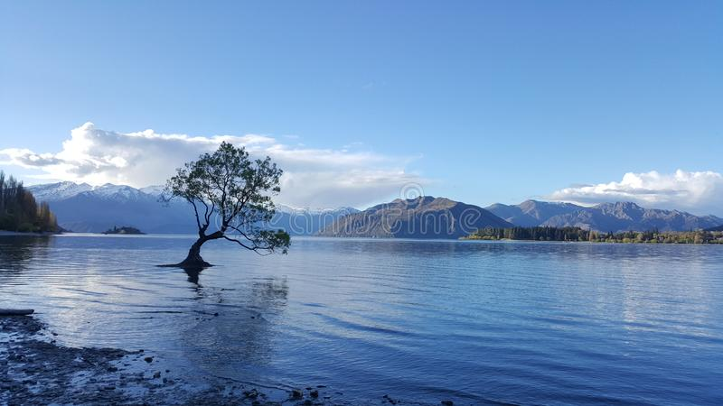 Famous Wanaka tree on the water. stock images