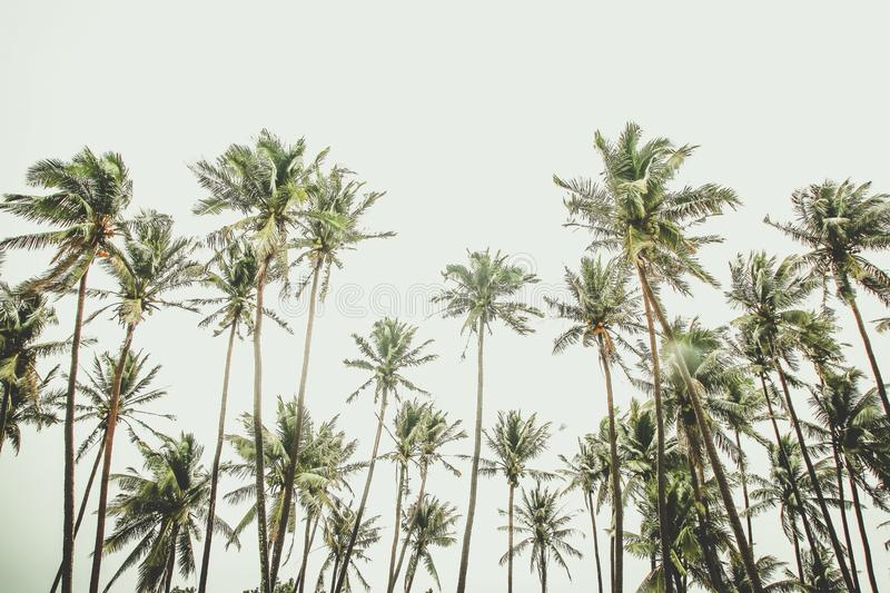 Tropical royalty free stock photography