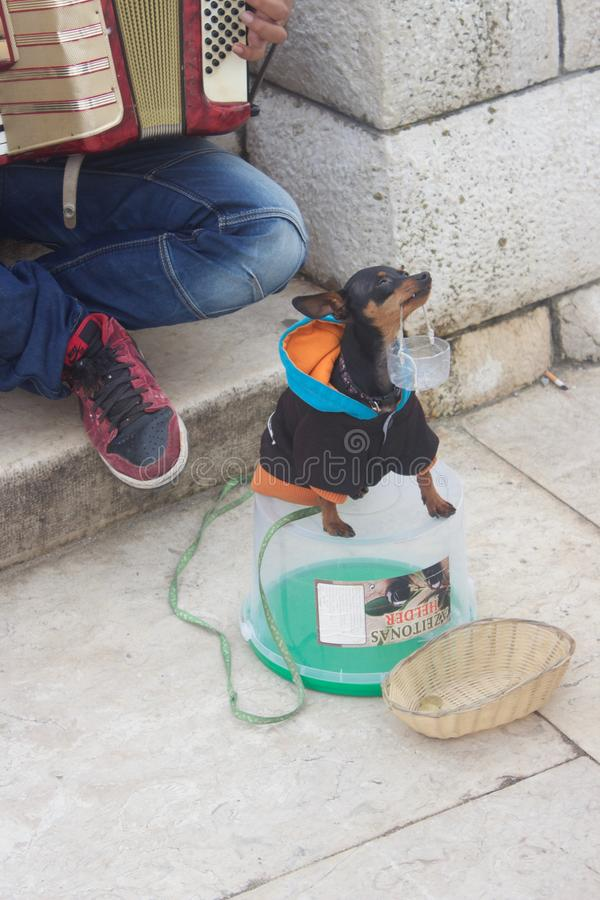 Dog begging for money in Portugal royalty free stock photography
