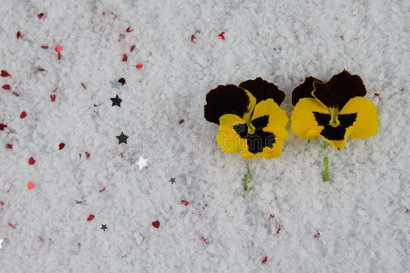 Winter season flower photography image with yellow pansy flowers laid in snow and sprinkled with small silver color stars stock photos