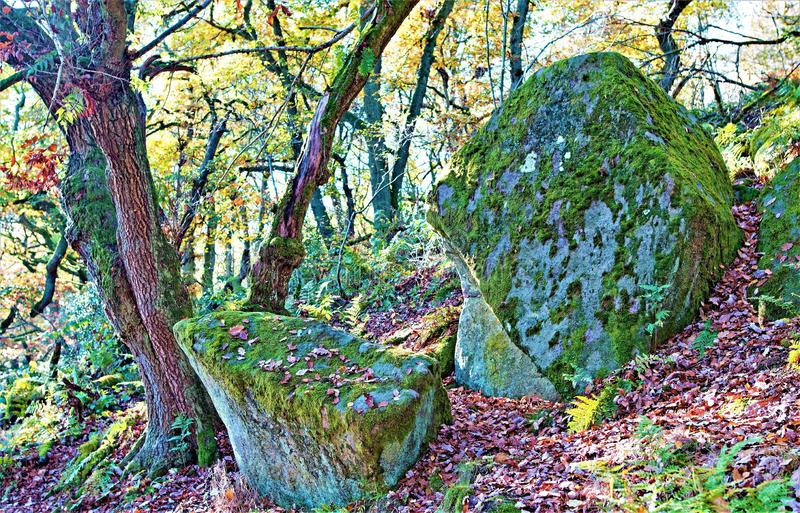 Nature`s throne, in Padley Gorge Woods, Grindleford, East Midlands. Taken to capture a unique rock formation within Padley Gorge Woods, Grindleford royalty free stock photos