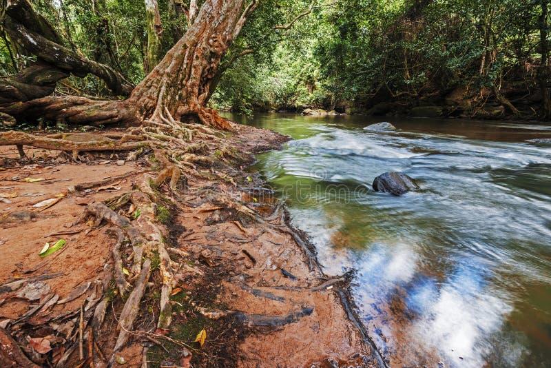 Takhongrivier in het Nationale Park van Khao Yai stock foto's