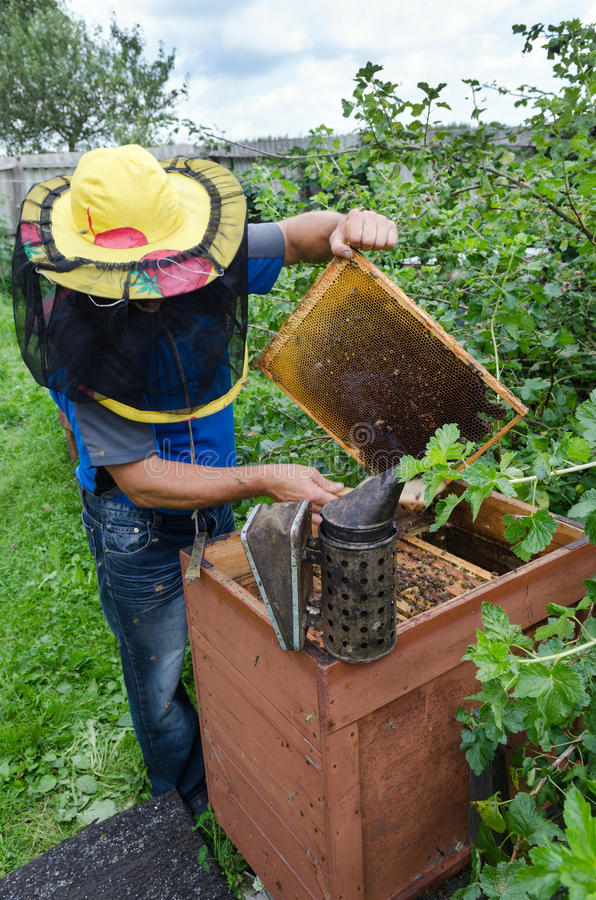 Taking out a Frame. An apiarist taking out a honey frame out of a beehive royalty free stock images