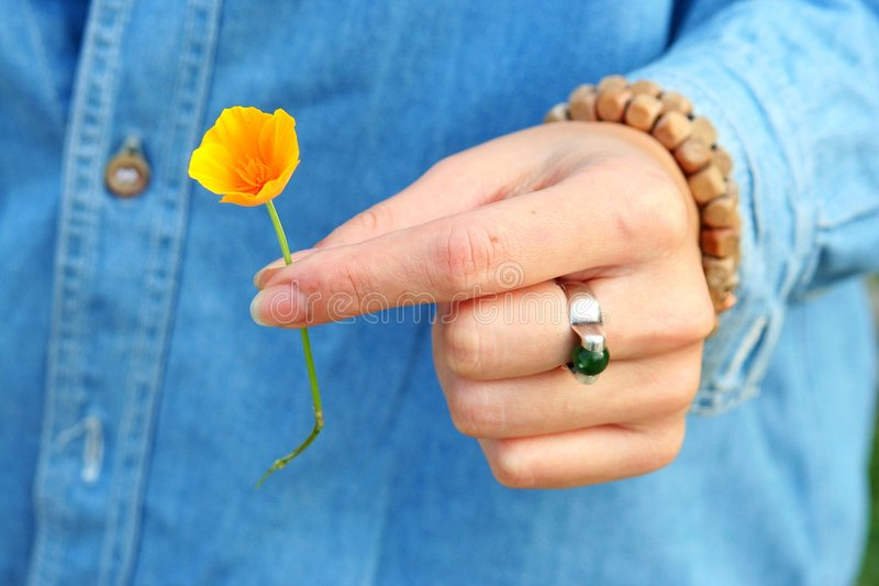 Download Takinng an orange flower stock photo. Image of gesture - 268420
