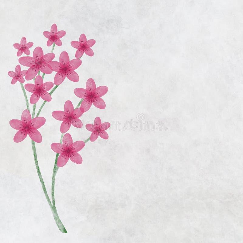Takje van bloeiende kersenbloesems voor decoratie royalty-vrije illustratie