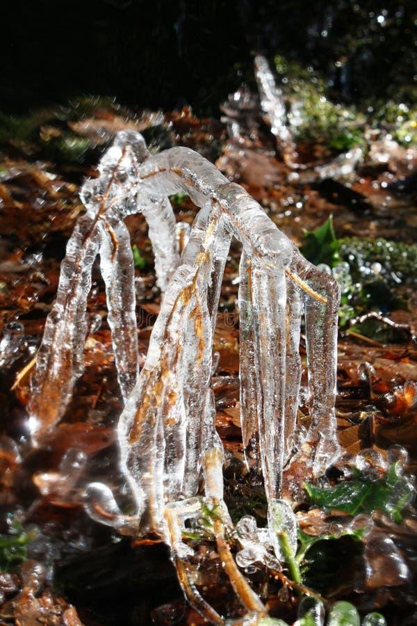 Takjes in ijs op de manier Schotland worden ingepakt dat van het het westenhoogland royalty-vrije stock afbeeldingen