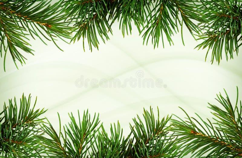 Takjes van groene Kerstboom voor grenzen stock afbeeldingen