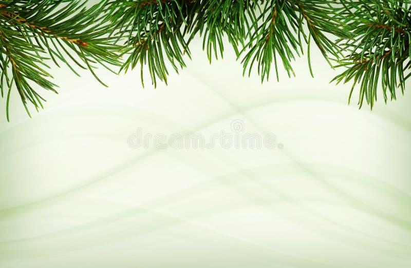 Takjes van groene Kerstboom voor hoogste grens stock foto