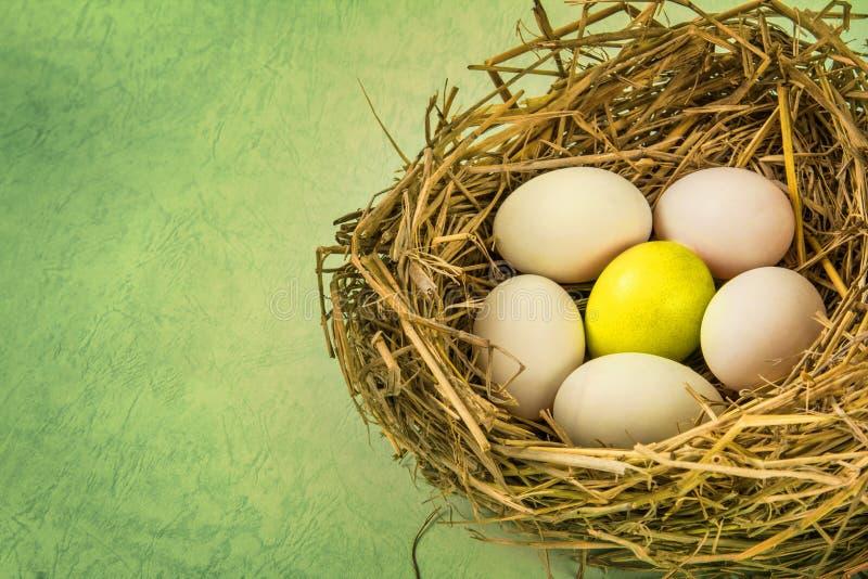 Takjesnest met wit ei en één van verschillend of uniek royalty-vrije stock fotografie