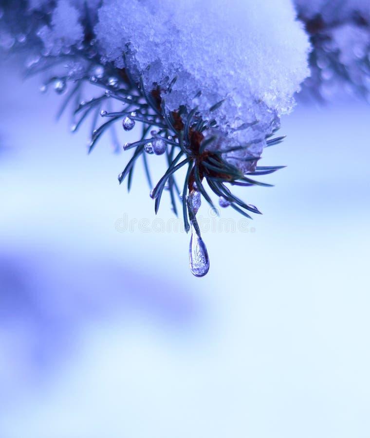 Takken in de sneeuw en de druppeltjes van onder-sneeuw royalty-vrije stock afbeelding