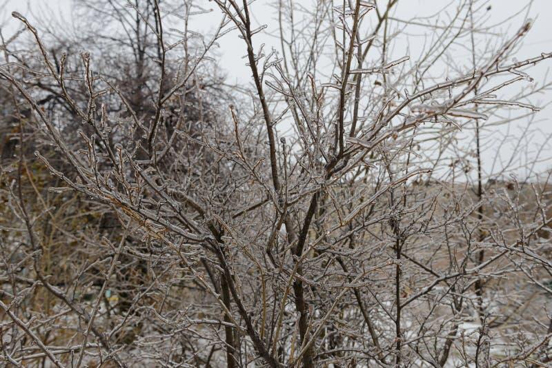 Takken in een ijzige korst na een ijzige regen royalty-vrije stock foto's