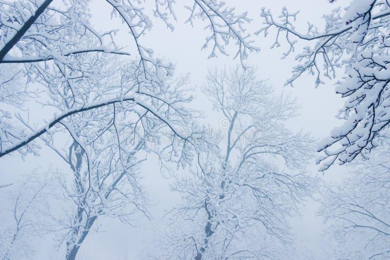 Takken onder sneeuw in de mist stock foto