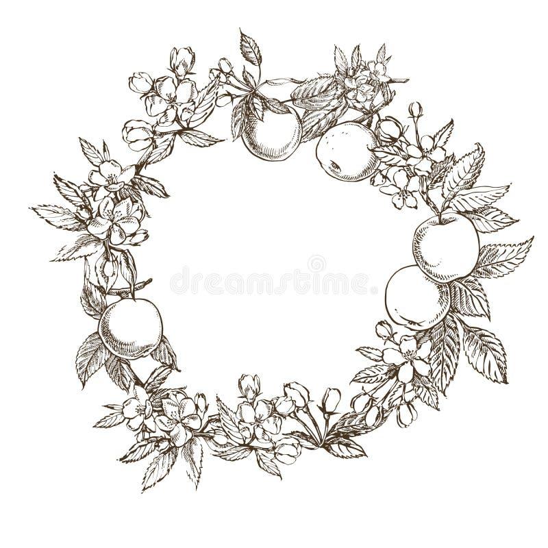 Takken van appelbloesem Het kan voor het verfraaien van huwelijksuitnodigingen, groetkaarten en decoratie voor zakken worden gebr royalty-vrije illustratie