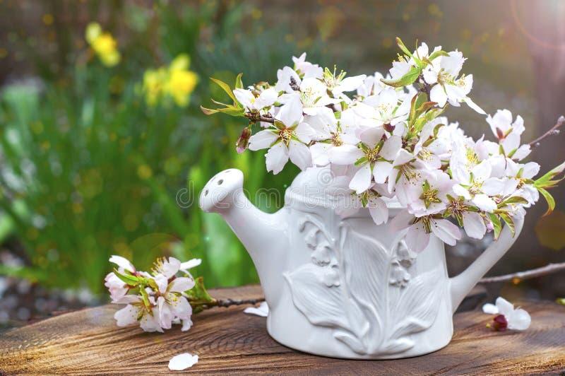 Takken van bloeiende amandelen in een ceramische vaas in de zon op a stock foto's