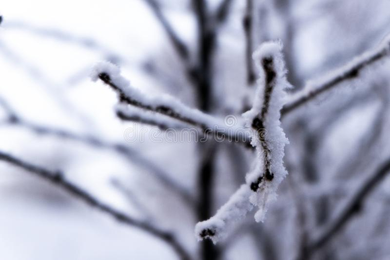 Takken van bomen met rijp voor ontwerp op het thema van de winterweer, sneeuw en vorst worden behandeld, die de temperatuur vermi royalty-vrije stock foto