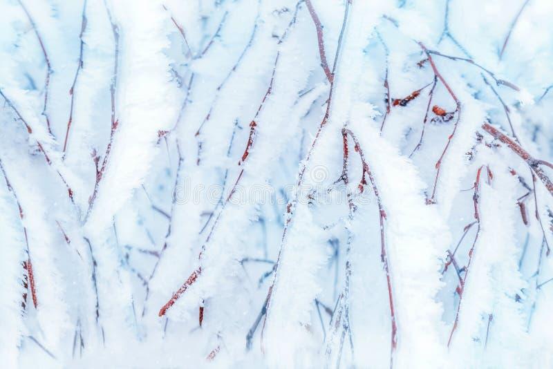 Takken van bomen in witte sneeuw en vorst op achtergrond van de winter de boskerstmis royalty-vrije stock fotografie