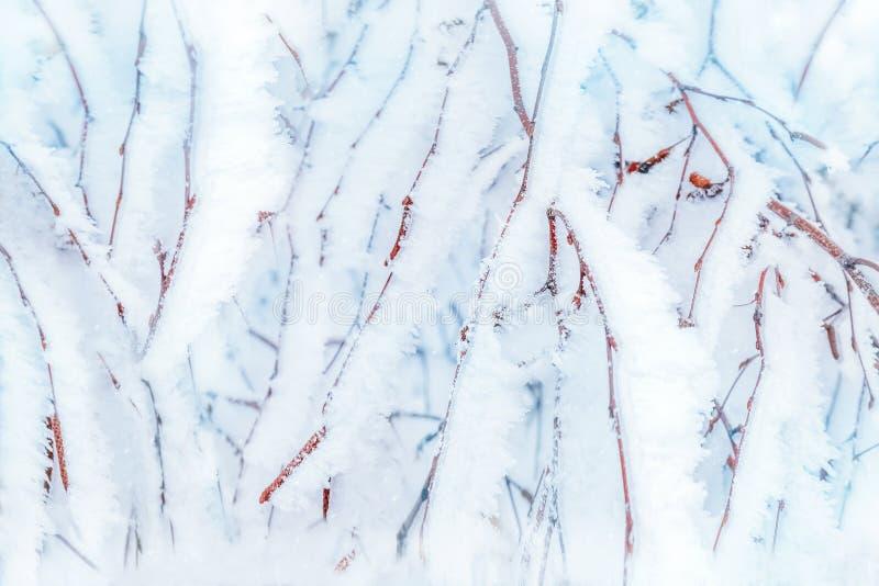 Takken van bomen in witte sneeuw en vorst op achtergrond van de winter de boskerstmis stock fotografie
