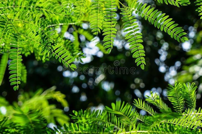 Takken van de trillende groene voorgrond van de lentebladeren met donkere gre royalty-vrije stock foto