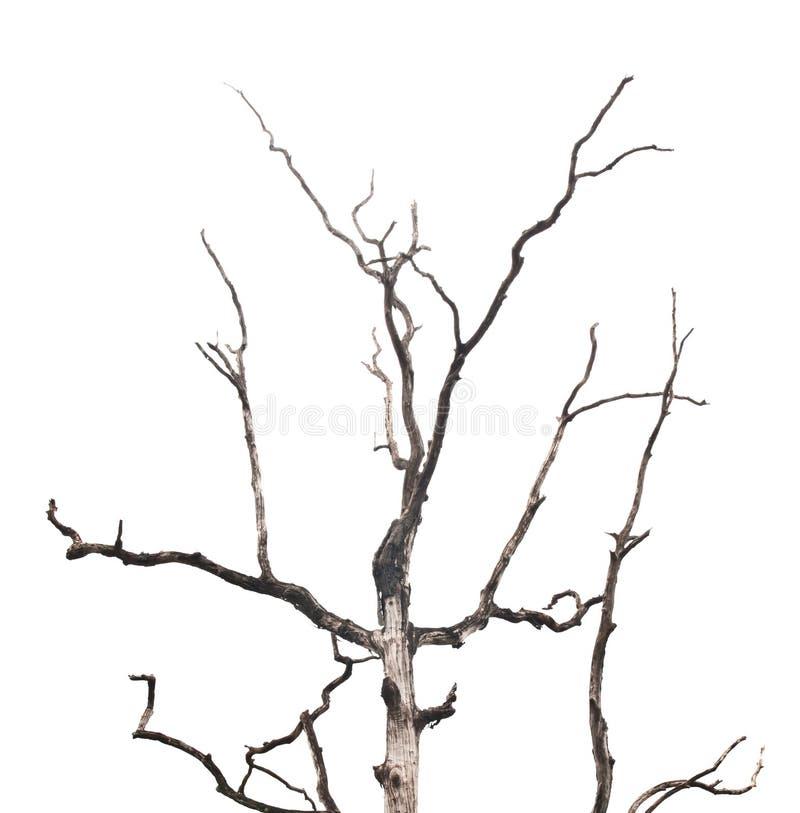 Takken van dode boom stock afbeeldingen