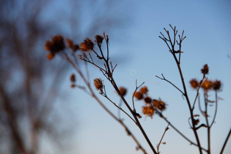 Takken van droog gras tegen de blauwe hemel stock foto
