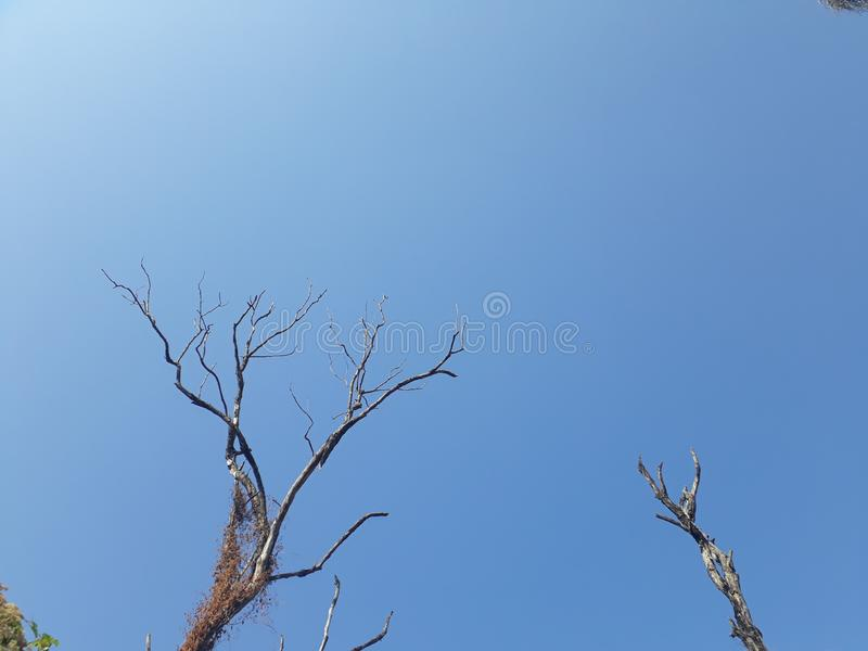 Takken van een oude boom met blauwe hemel als achtergrond stock foto's