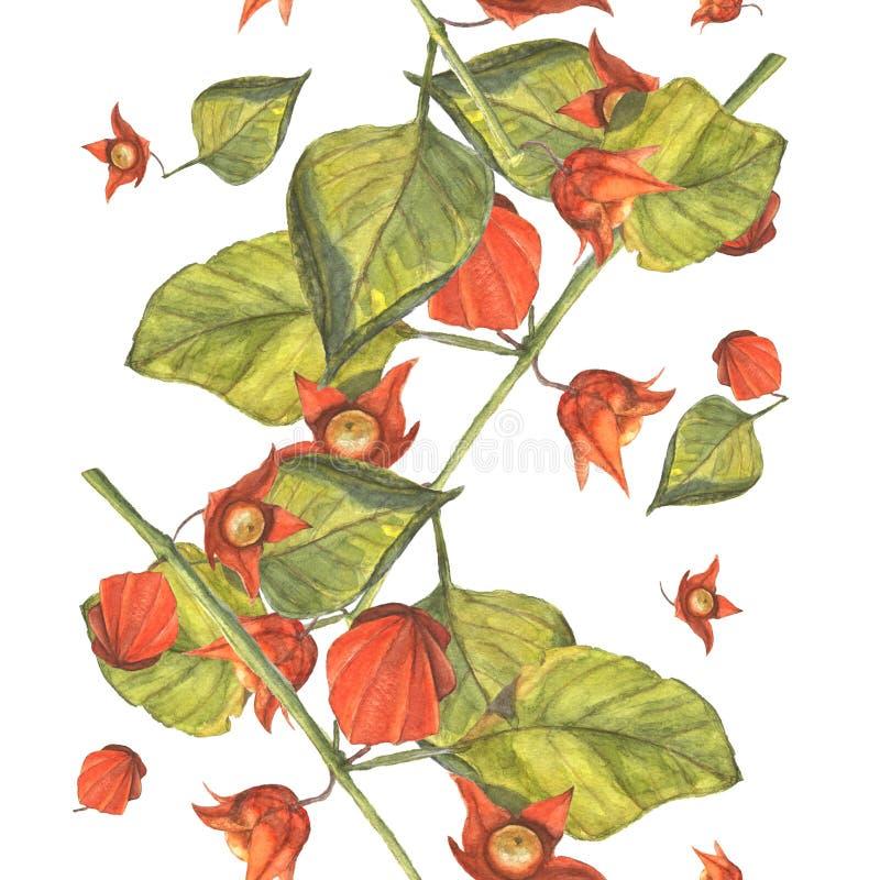 Takken van oranje physalis royalty-vrije illustratie