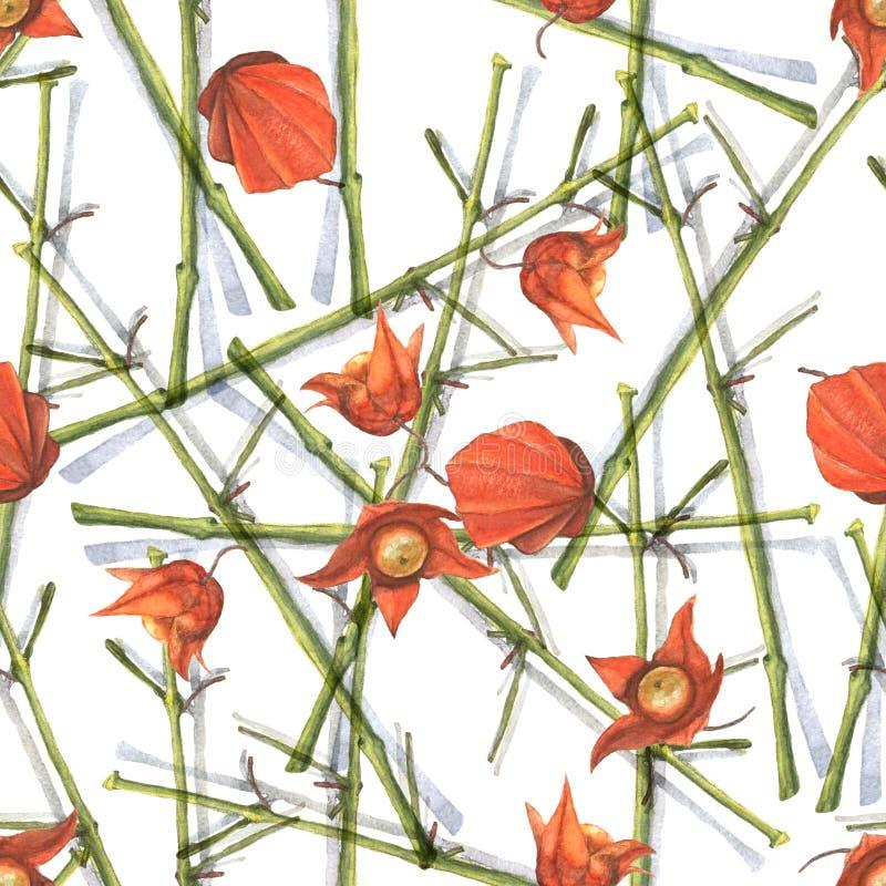 Takken van oranje physalis stock illustratie